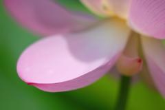 花便り - 優美な彎曲 -