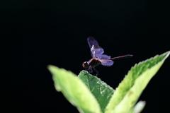 生き物写真館 - 漆黒の羽休め -