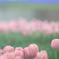 花便り - パステルカラーの春花壇 -