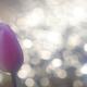 花便り - 冬玉ボケに囲まれて -