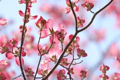 花便り - 華やかな恋 -