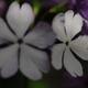 花便り - 秋の装い -