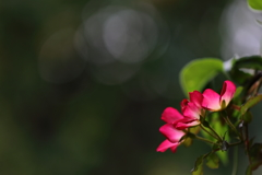 花便り - 秋カクテルの出迎え -