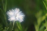 花便り - 淑やかな白 -
