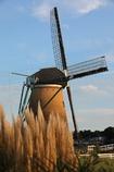 印旛沼・風車 - パンパスグラスとともに -