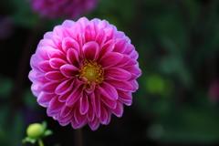 花便り - あふれる喜び -