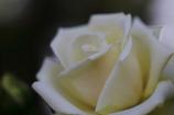 花便り - 最後の皇后 -