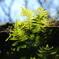 花便り - 透過した緑に惹かれて -