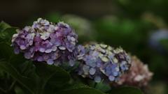 花便り - 終焉のとき -