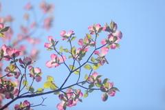 花便り - 心地良い春の陽射し -