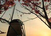 CANON Canon EOS 5D Mark IVで撮影した(印旛沼・風車 - 夕陽と共に -)の写真(画像)