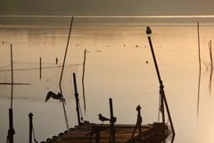 印旛沼・水鳥 - 出途へのシルエット -