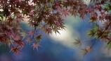 花便り - 多様な秋色 -