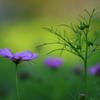 花便り - 秋気配 -