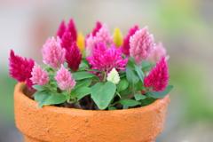 花便り - 小さな花たちに癒されて -