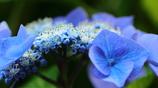 花便り - 両性花の花盛り -