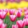 花便り - 春彩盛り -
