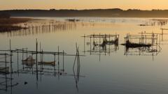 印旛沼・朝景 - 水鳥たちのそれぞれの朝 -