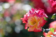 花便り - 初夏のチャールストン -