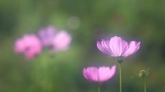 花便り - 秋の陽光を浴びて -