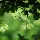 花便り - 桂の樹の下で -