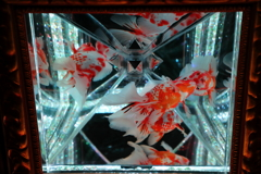 生き物写真館 - 金魚の涼 -