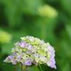 花便り - 心弾む花姿 -