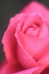 花便り - 恋心に魅せられて -