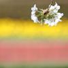花便り - 春の和菓子競演 -