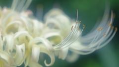 花便り - また会う日を楽しみに -