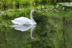 生き物写真館 - 睡蓮池の微睡み -