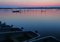 CANON Canon EOS 5D Mark IVで撮影した(印旛沼・朝景 - さくら色の水面 -)の写真(画像)
