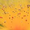 花便り - 雄しべ達の主張 -