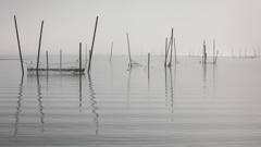 印旛沼・朝景 - 霧中のボサ網 -