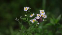 花便り - 春紫苑と姫裏波蛇目 -