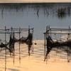 印旛沼・朝景 - 金彩のボサ網 -