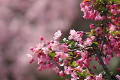 花便り - 美人の目覚め -