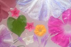 花便り - 朝顔を楽しむ -