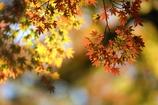 花便り - 暖色の彩り -