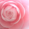 花便り - 確かな美 -