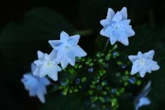 花便り - 妖美な花姿 -