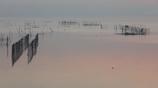 印旛沼・朝景 - 静穏の水面 -