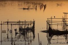 印旛沼・朝景 - 水鳥たちのシルエット競演 -