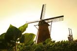 印旛沼・風車 - 向日葵のプロローグ -