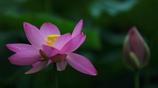花便り - しっぽりと咲く -
