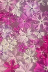 花便り - 水盤の粋 -