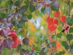 花便り - 秋色のリース -