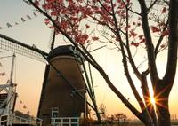 CANON Canon EOS 5D Mark IVで撮影した(印旛沼・風車 - 桜と光条と -)の写真(画像)