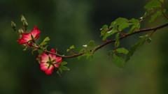 花便り - 夏剪定を終えて -