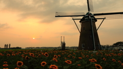 印旛沼・風車 - 向日葵の咲く夕暮れ -